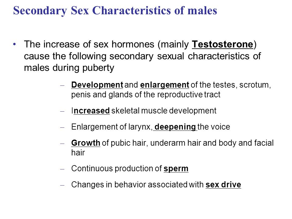 Secondary sexual characteristics testosterone