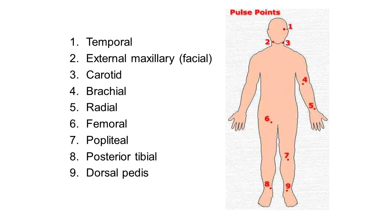 Summary Which Artery Is Palpated When A Pulse Taken Jpg 1280x720 Palpate Sites