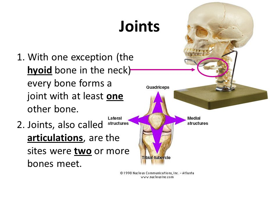 Joints Intro/Types of Joints. Joints 1. With one exception (the ...