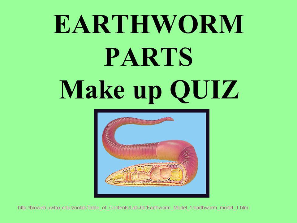 Earthworm Parts Make Up Quiz Ppt Download