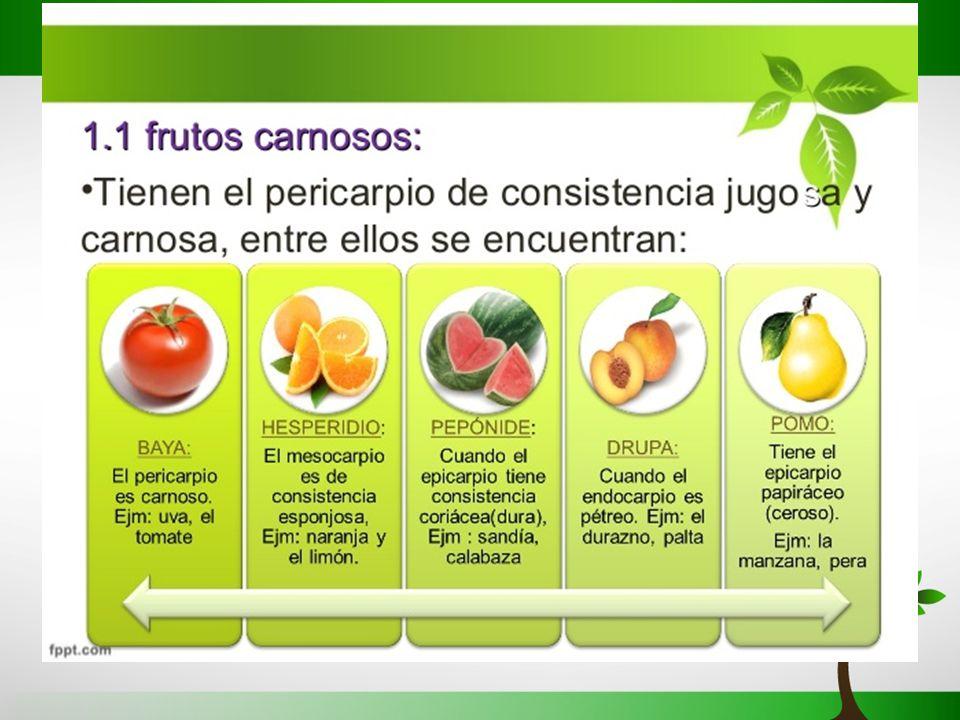 T.14 la reproducción de las plantas - ppt video online download