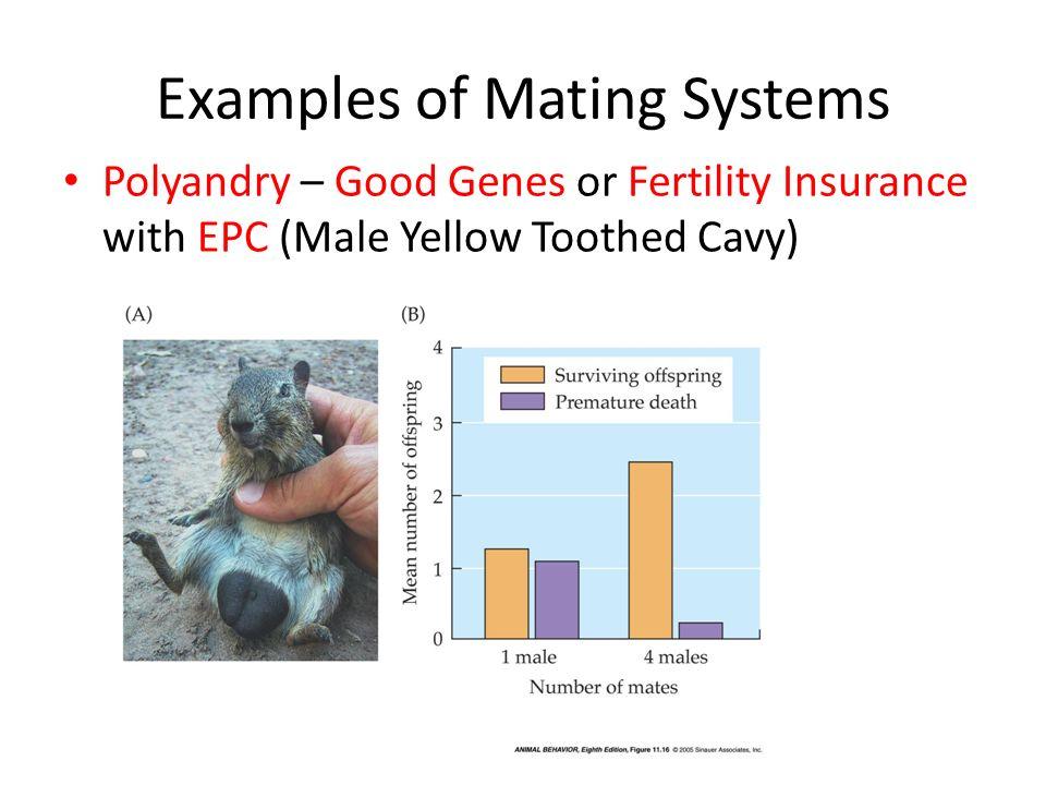 polyandry examples