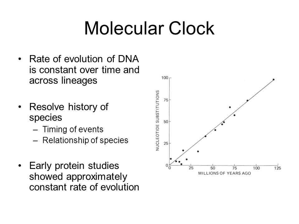 dna as a molecular clock