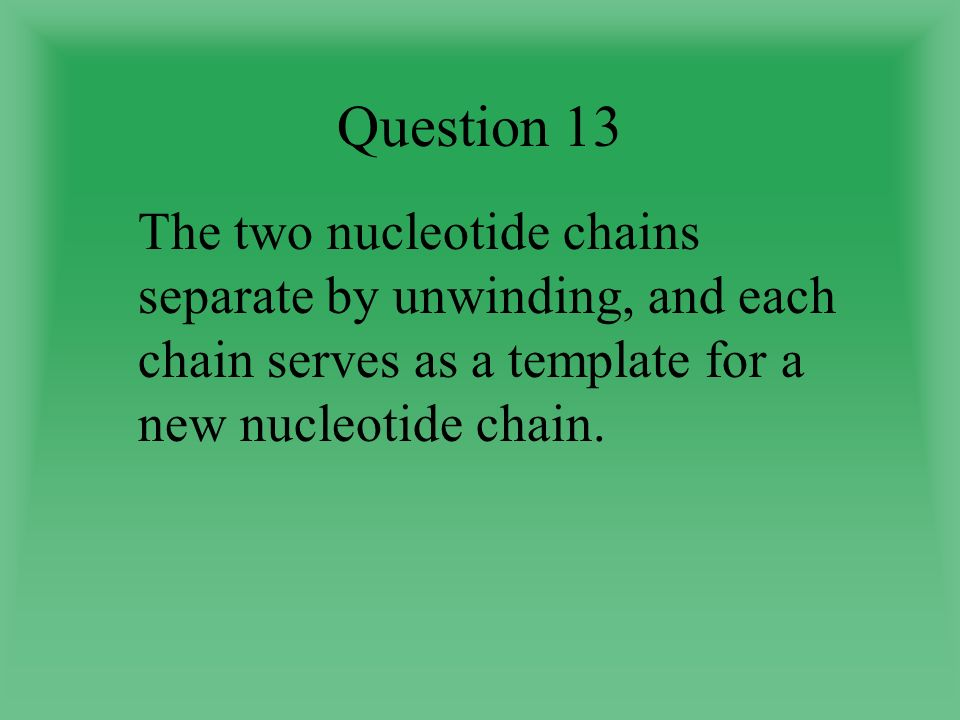 Question 13 The two nucleotide chains separate by unwinding, and each chain serves as a template for a new nucleotide chain.