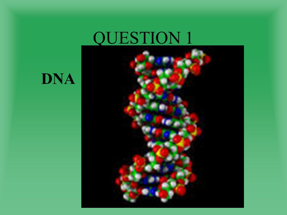 QUESTION 1 DNA
