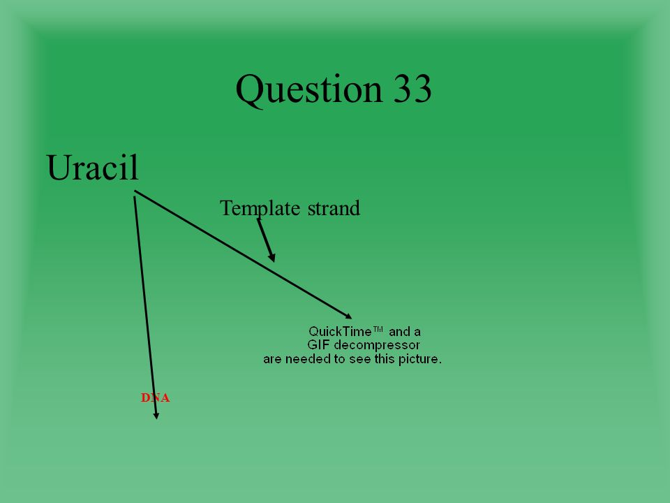 Question 33 Uracil Template strand DNA