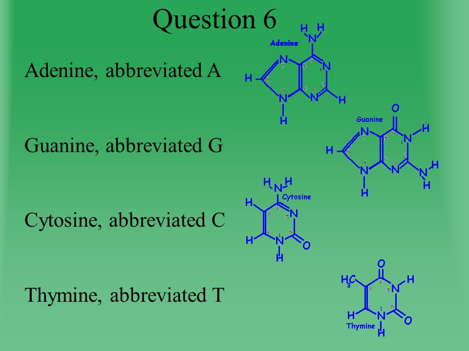Question 6 Adenine, abbreviated A Guanine, abbreviated G Cytosine, abbreviated C Thymine, abbreviated T