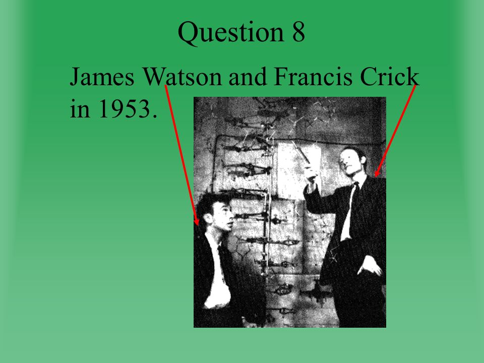 Question 8 James Watson and Francis Crick in 1953.
