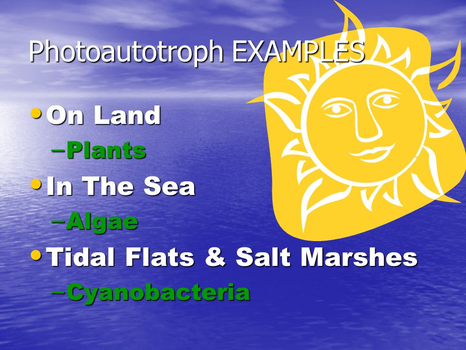 On Land On Land – Plants In The Sea In The Sea – Algae Tidal Flats & Salt Marshes Tidal Flats & Salt Marshes – Cyanobacteria Photoautotroph EXAMPLES