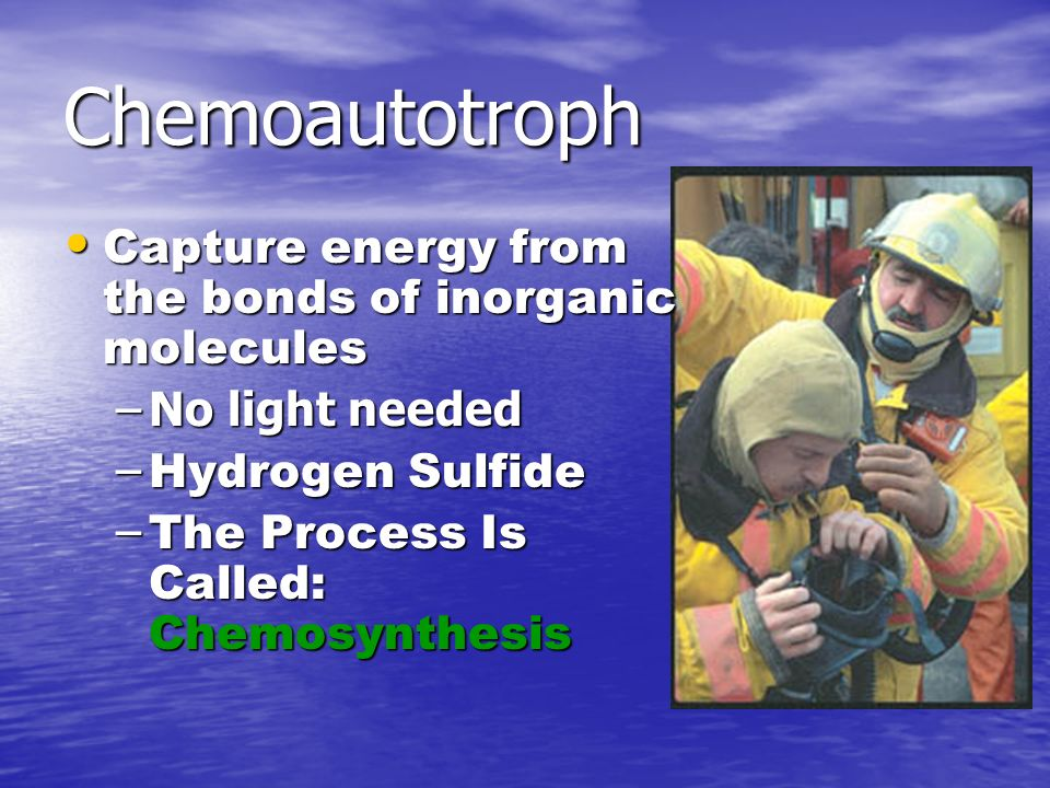 Chemoautotroph Capture energy from the bonds of inorganic molecules Capture energy from the bonds of inorganic molecules –No light needed – Hydrogen Sulfide – The Process Is Called: Chemosynthesis