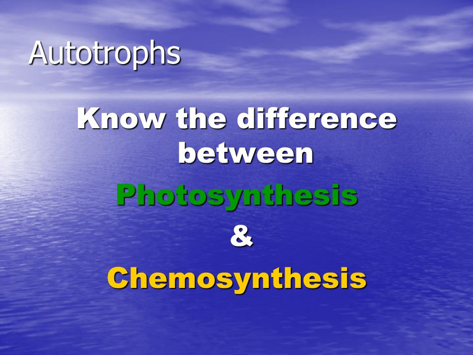 Autotrophs Know the difference between Photosynthesis &Chemosynthesis