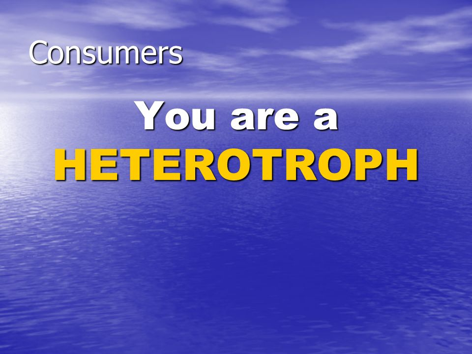 Consumers You are a HETEROTROPH