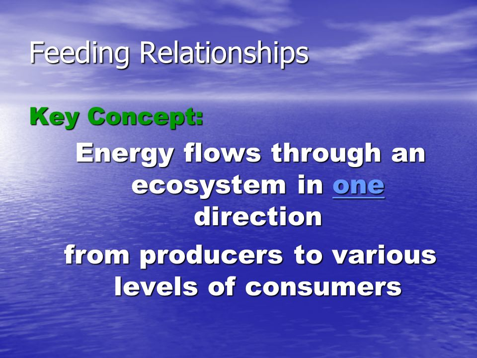 Feeding Relationships Key Concept: Energy flows through an ecosystem in one direction from producers to various levels of consumers