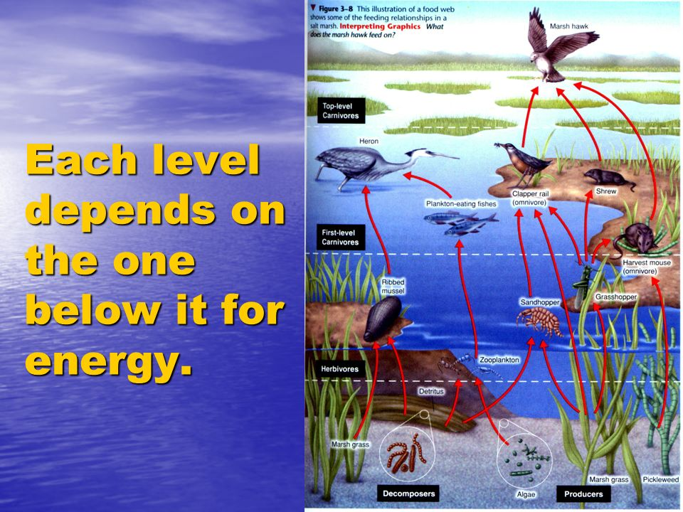 Each level depends on the one below it for energy.
