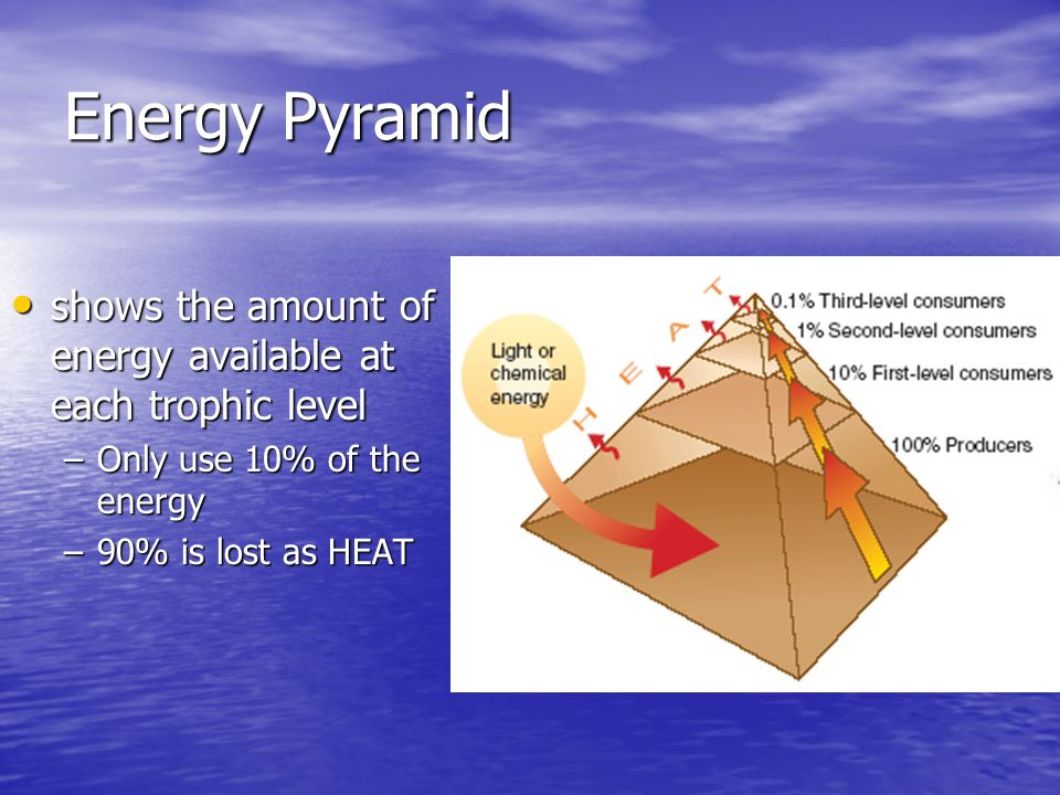 Energy Pyramid shows the amount of energy available at each trophic level shows the amount of energy available at each trophic level –Only use 10% of the energy –90% is lost as HEAT