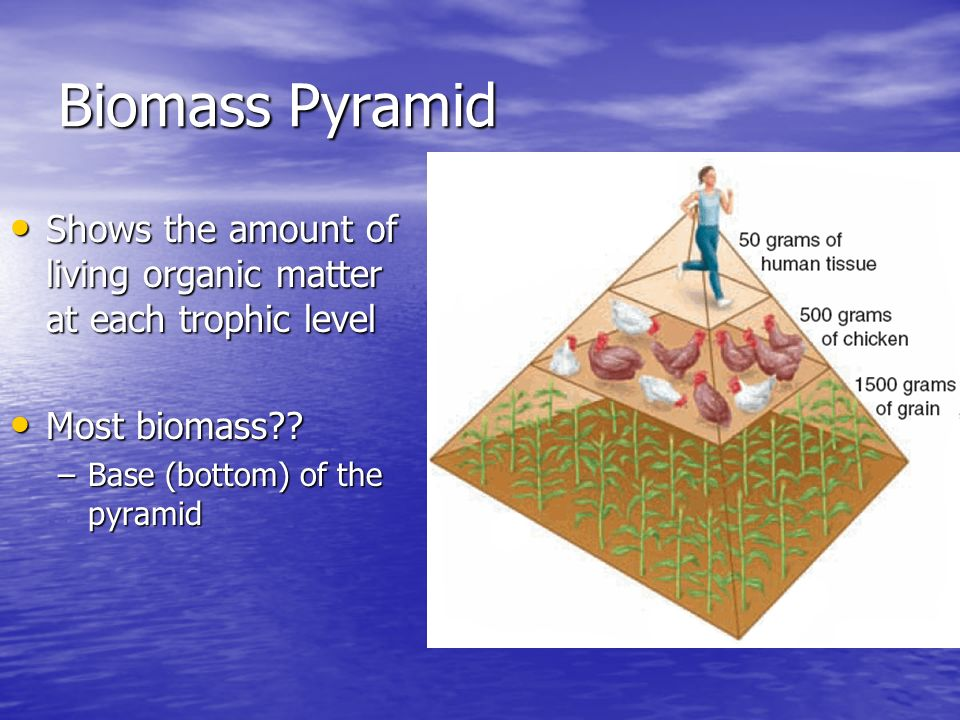 Biomass Pyramid Shows the amount of living organic matter at each trophic level Shows the amount of living organic matter at each trophic level Most biomass .
