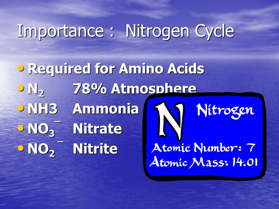 Importance : Nitrogen Cycle Required for Amino Acids Required for Amino Acids N 2 78% Atmosphere N 2 78% Atmosphere NH3Ammonia NH3Ammonia NO 3 ¯ Nitrate NO 3 ¯ Nitrate NO 2 ¯ Nitrite NO 2 ¯ Nitrite