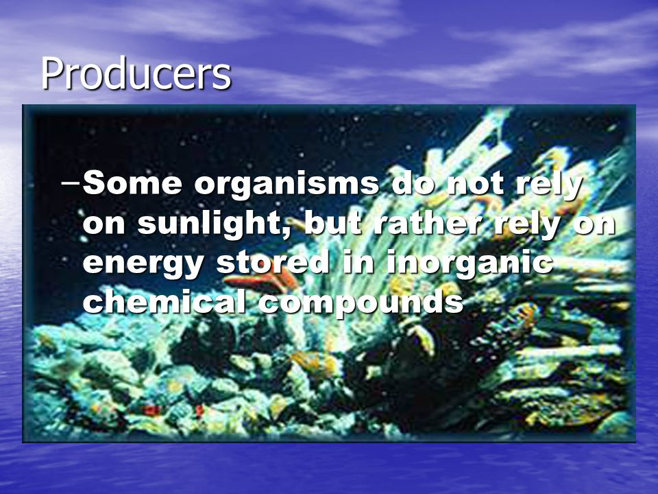Producers – Some organisms do not rely on sunlight, but rather rely on energy stored in inorganic chemical compounds
