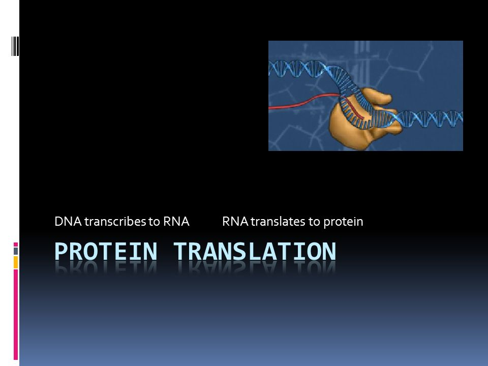 DNA transcribes to RNA RNA translates to protein