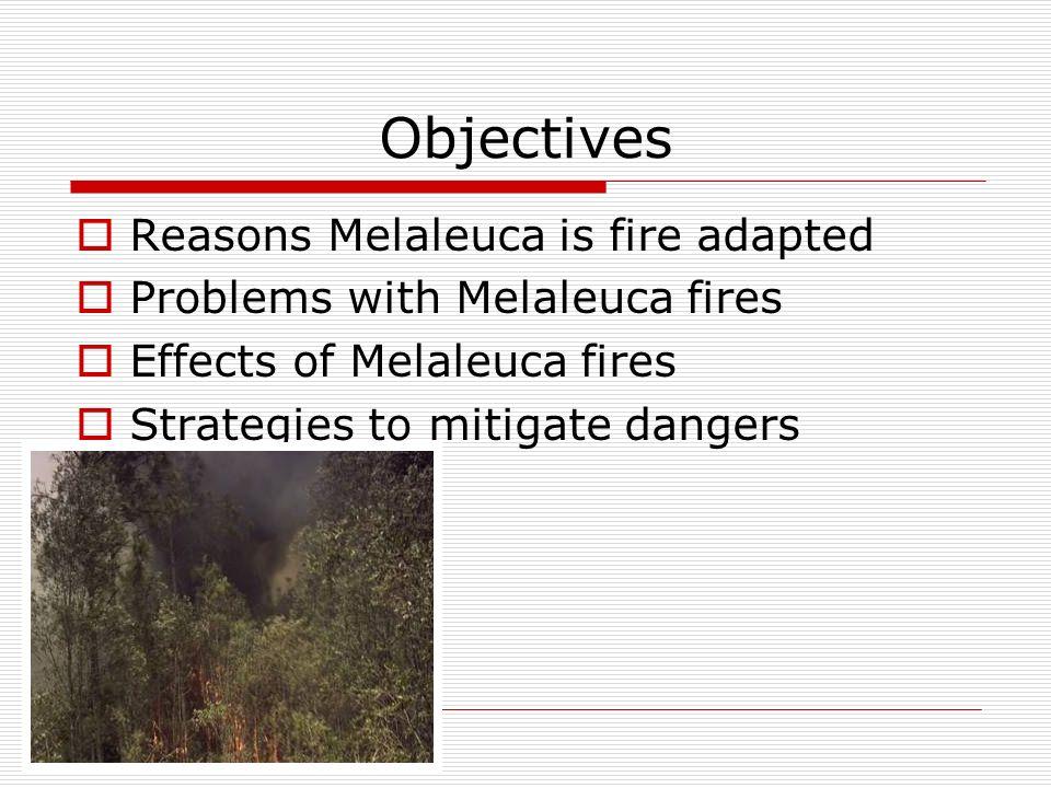 Melaleuca presentation.