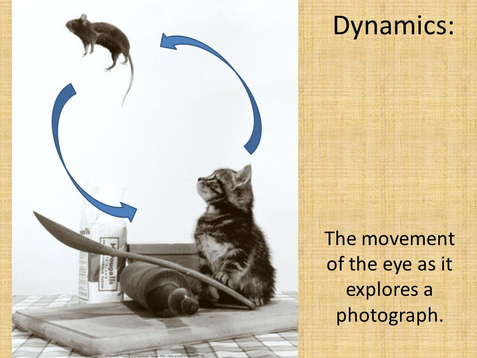 Dynamics: The movement of the eye as it explores a photograph.