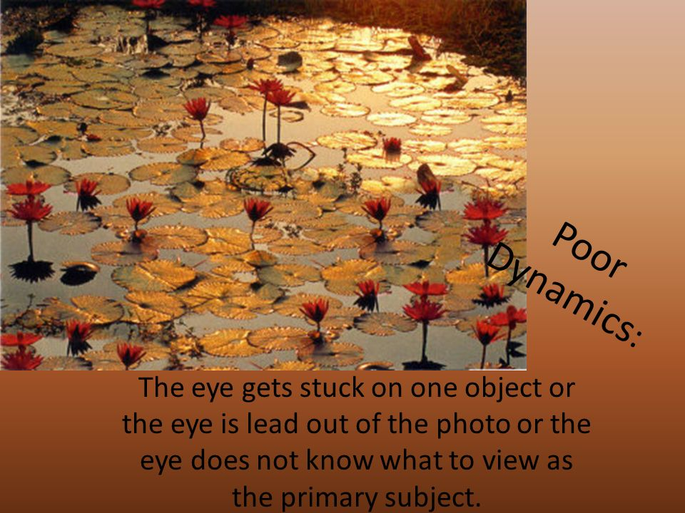 Poor Dynamics : The eye gets stuck on one object or the eye is lead out of the photo or the eye does not know what to view as the primary subject.