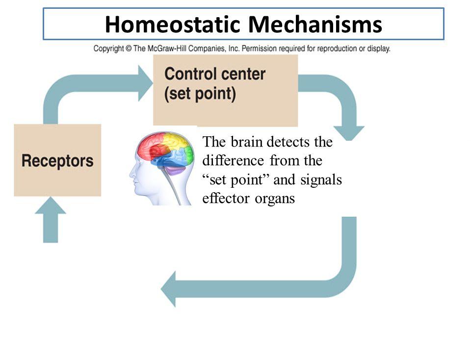 homeostatic Definiții, conjugări, declinări, paradigme pentru homeostatic din dicționarele: ortografic, dn homeostátic, - ă adj referitor la homeostazie [ fr homéostatique.