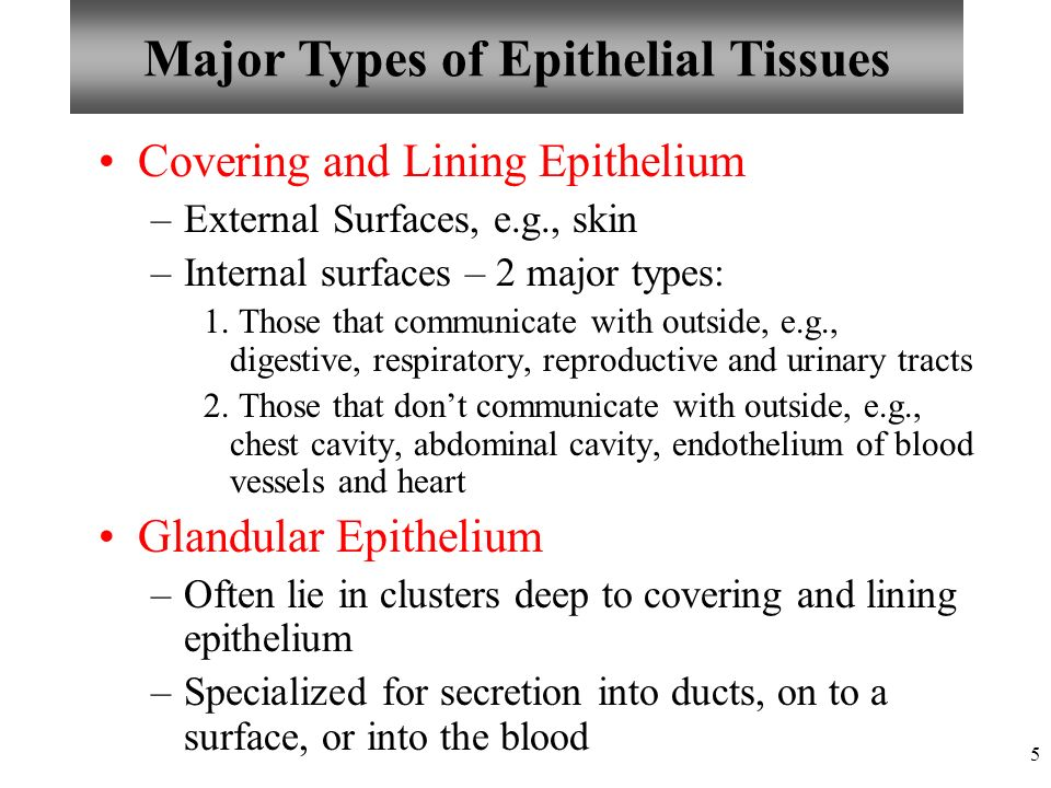 Chapter 4 Tissues: The Living Fabric Epithelial Tissues Lecture 9 ...