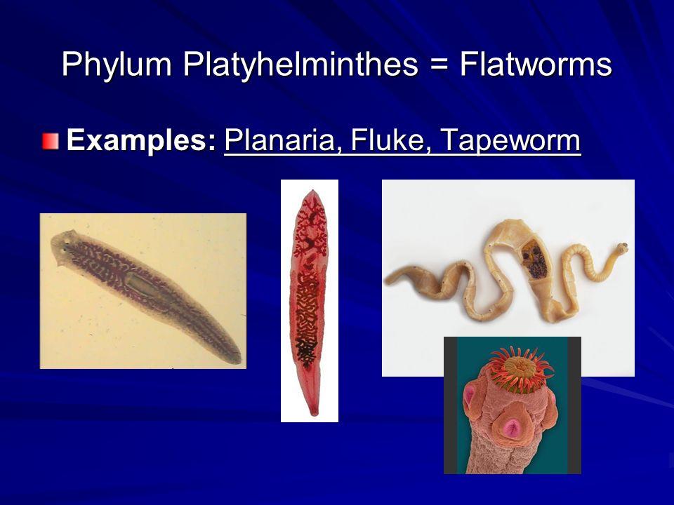 Clase și exemple de platyhelminthes