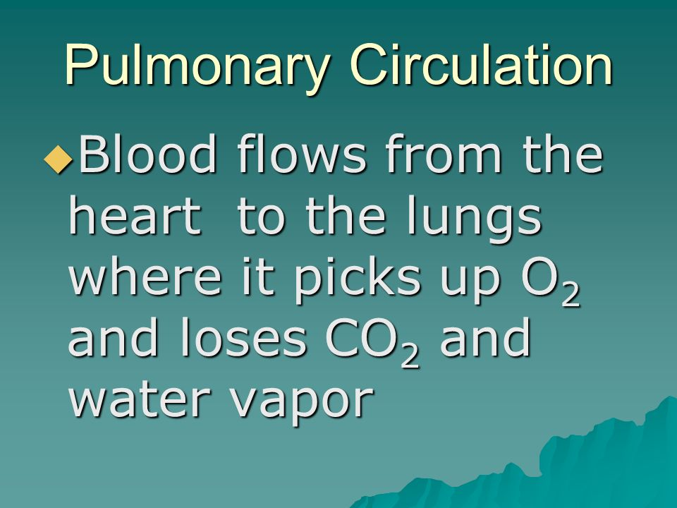 Pulmonary Circulation  Blood flows from the heart to the lungs where it picks up O 2 and loses CO 2 and water vapor