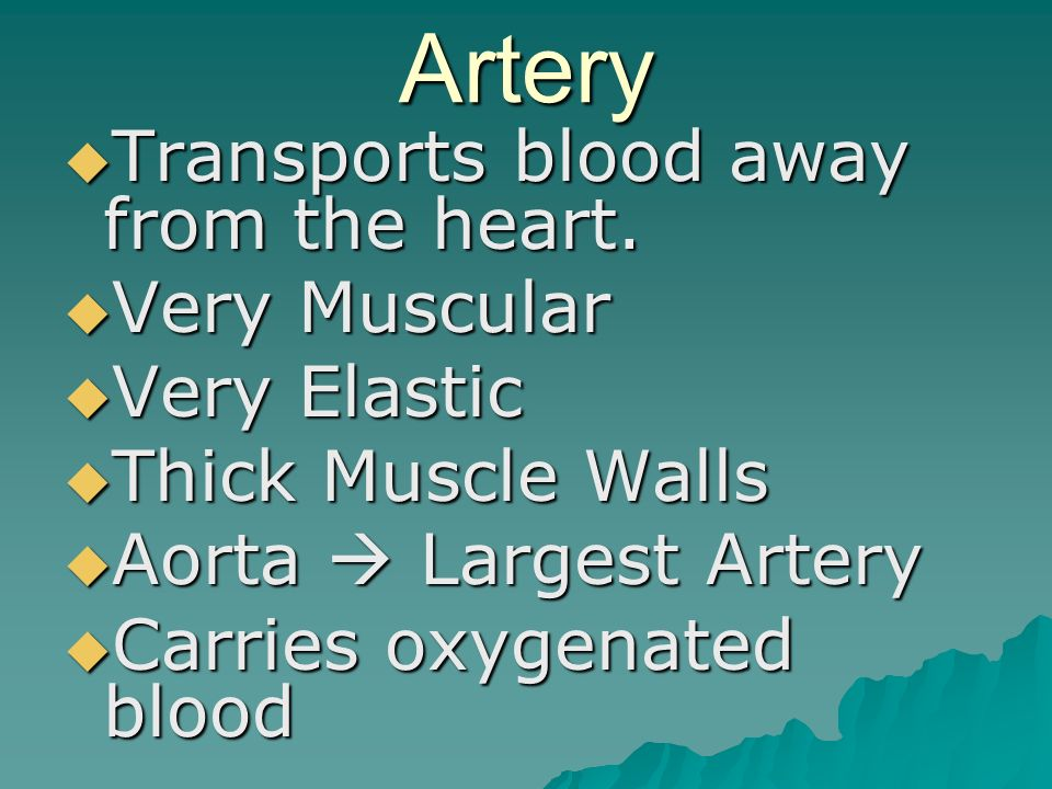 Artery  Transports blood away from the heart.