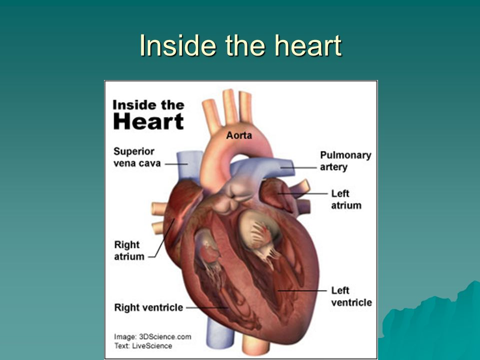 Inside the heart
