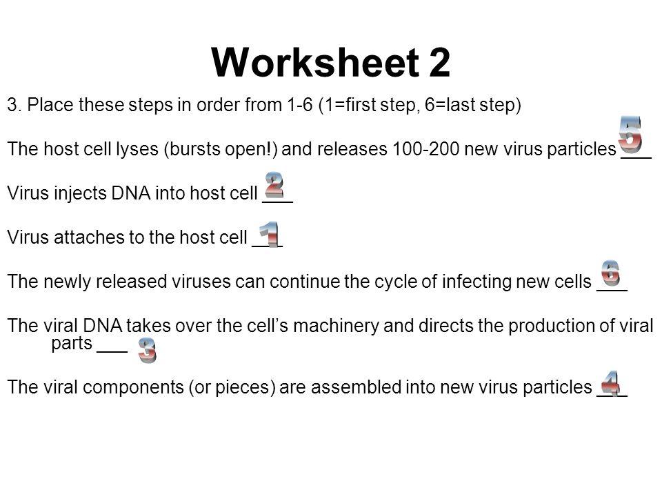 Worksheet 1 16 Species 17 Kingdom 18 Order 19 Species 20