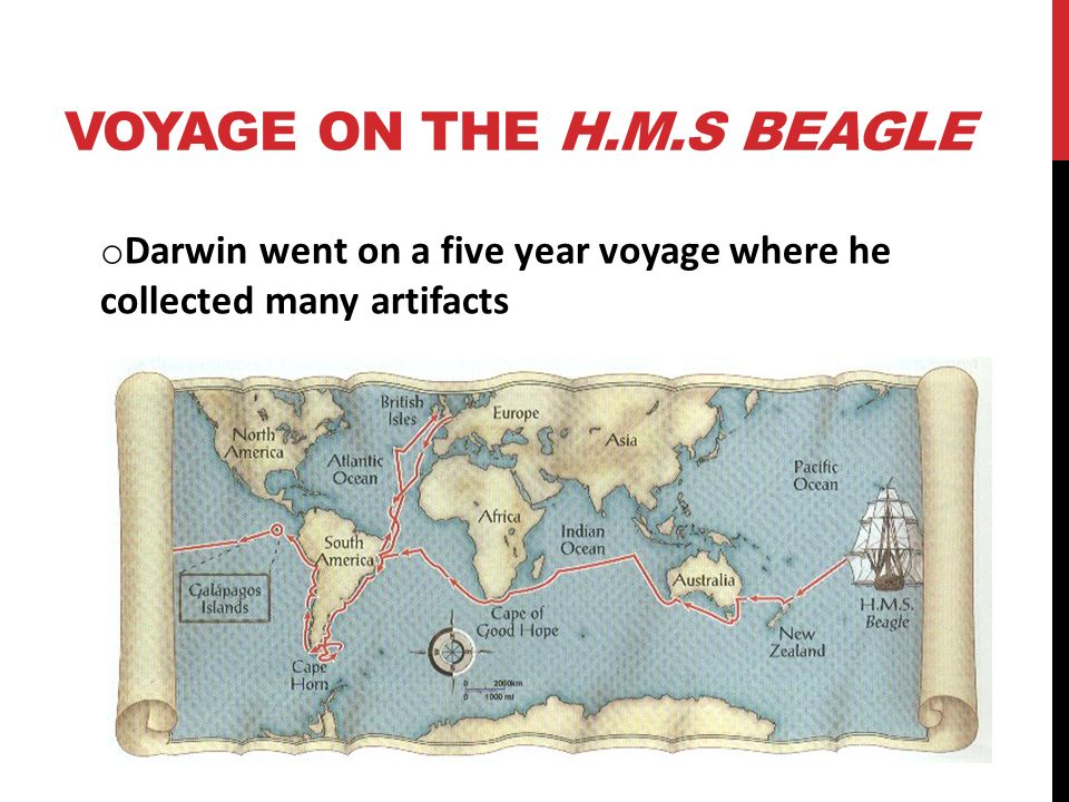 VOYAGE ON THE H.M.S BEAGLE o Darwin went on a five year voyage where he collected many artifacts