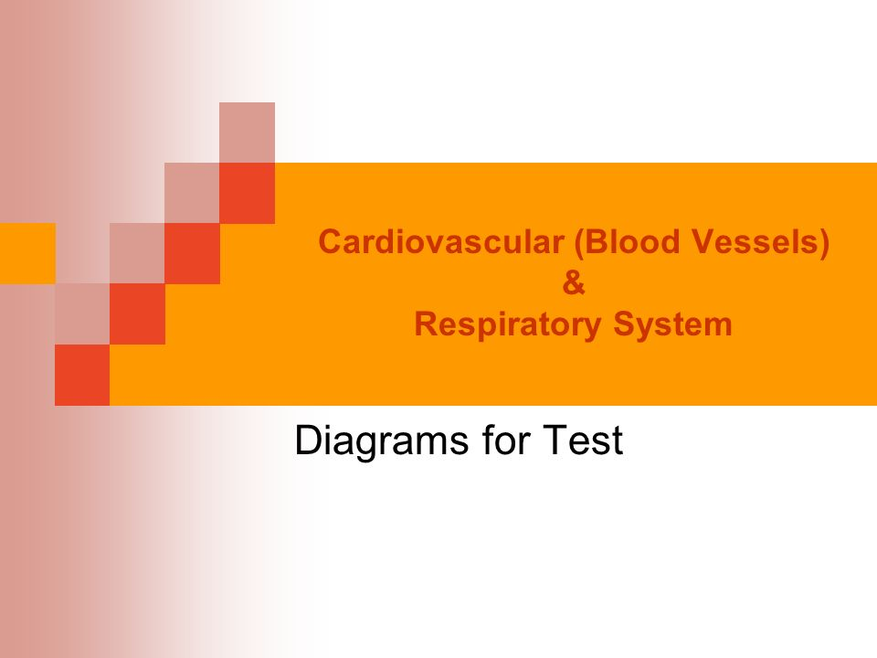 Cardiovascular blood vessels respiratory system diagrams for 1 cardiovascular blood vessels respiratory system diagrams for test ccuart Images