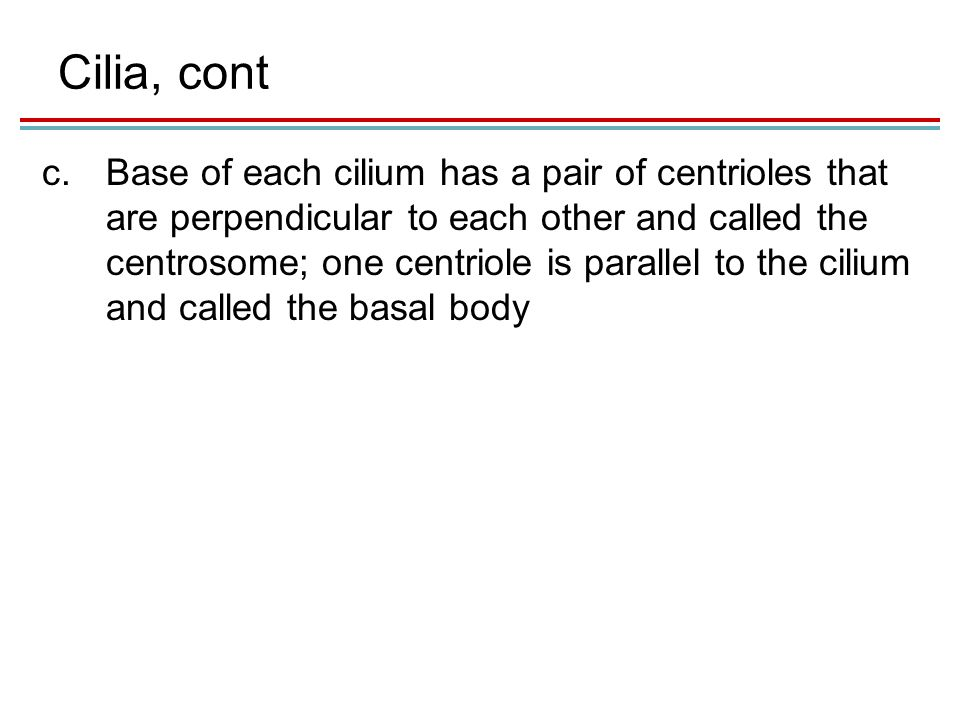 Cilia, cont c.Base of each cilium has a pair of centrioles that are perpendicular to each other and called the centrosome; one centriole is parallel to the cilium and called the basal body