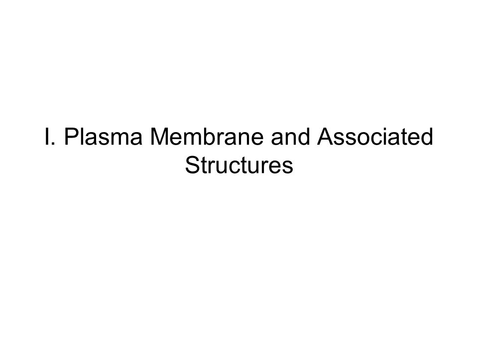 I. Plasma Membrane and Associated Structures