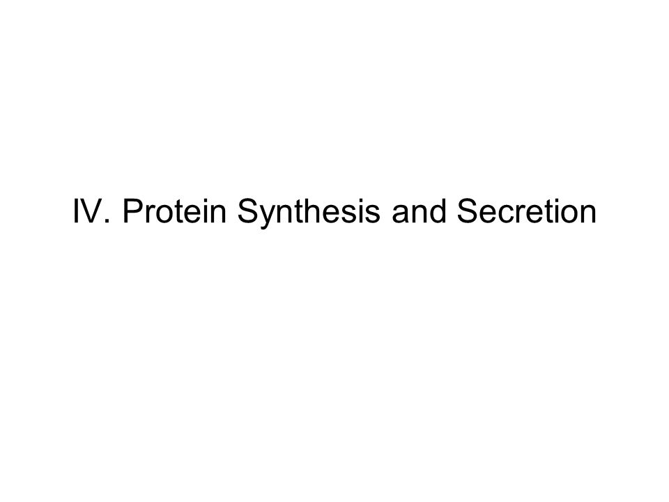 IV. Protein Synthesis and Secretion