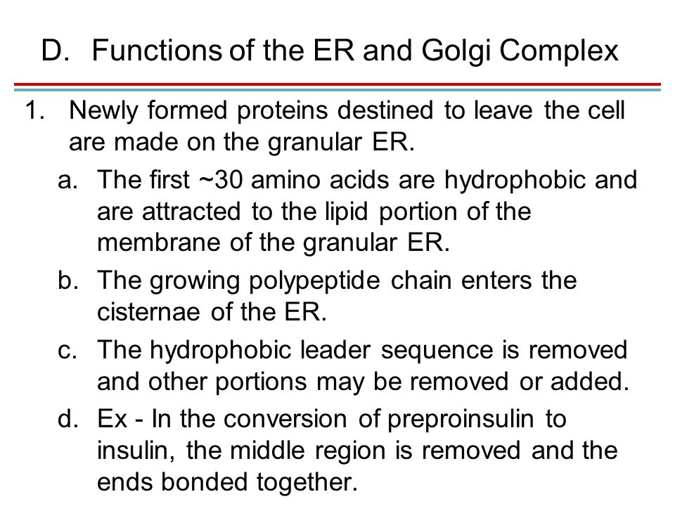 D.Functions of the ER and Golgi Complex 1.Newly formed proteins destined to leave the cell are made on the granular ER.