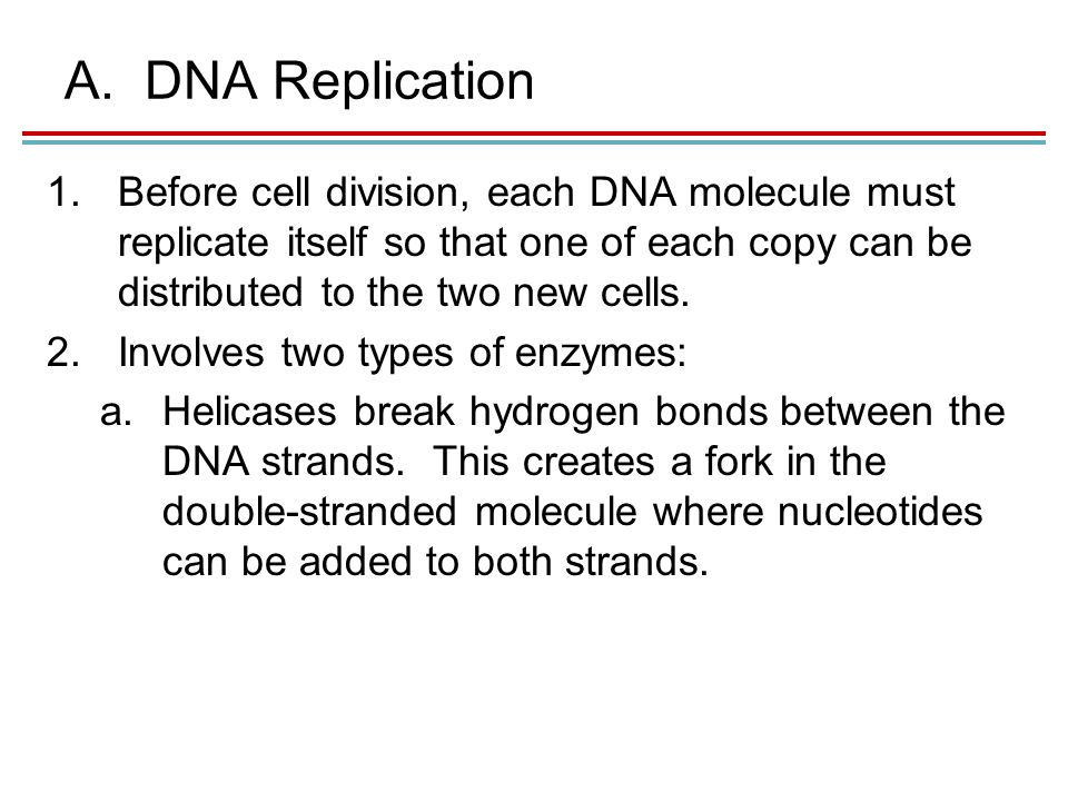 A.DNA Replication 1.Before cell division, each DNA molecule must replicate itself so that one of each copy can be distributed to the two new cells.