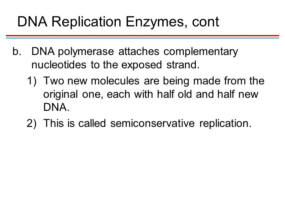 DNA Replication Enzymes, cont b.DNA polymerase attaches complementary nucleotides to the exposed strand.