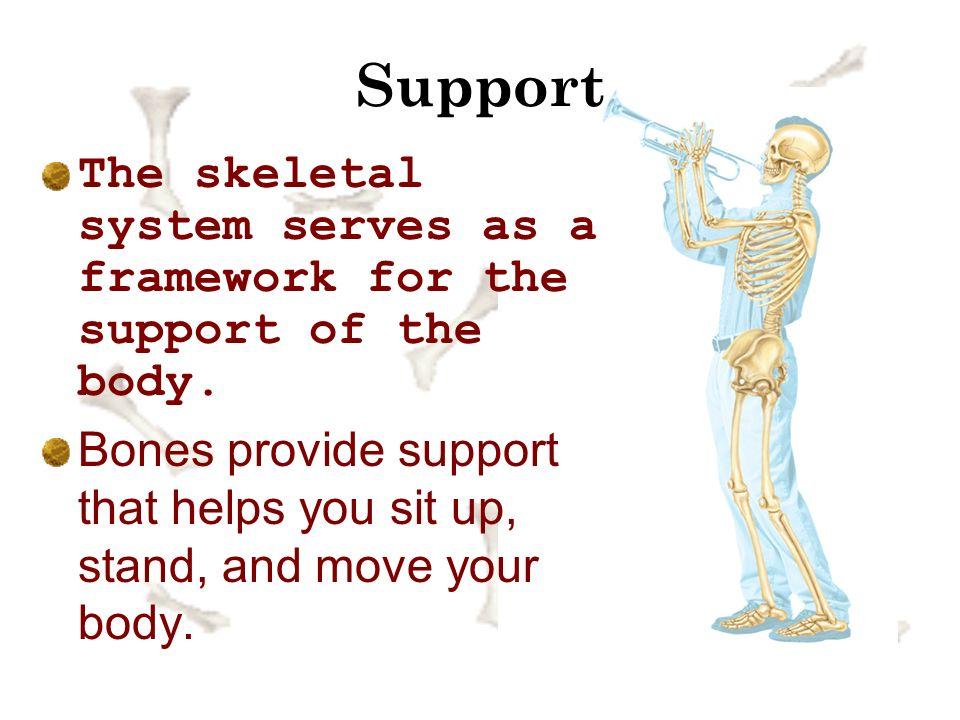The Skeletal System Chapter 14 Lesson 1 Part 1 How Do Bones