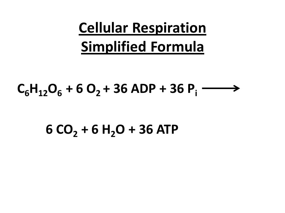 Meanings Of Respiration 1 External Respiration Exchange Of Gasses