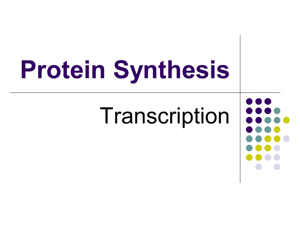 Protein Synthesis Transcription
