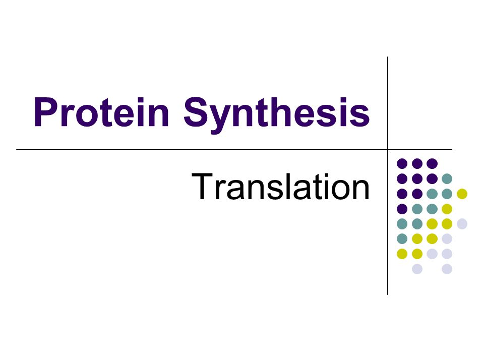 Protein Synthesis Translation