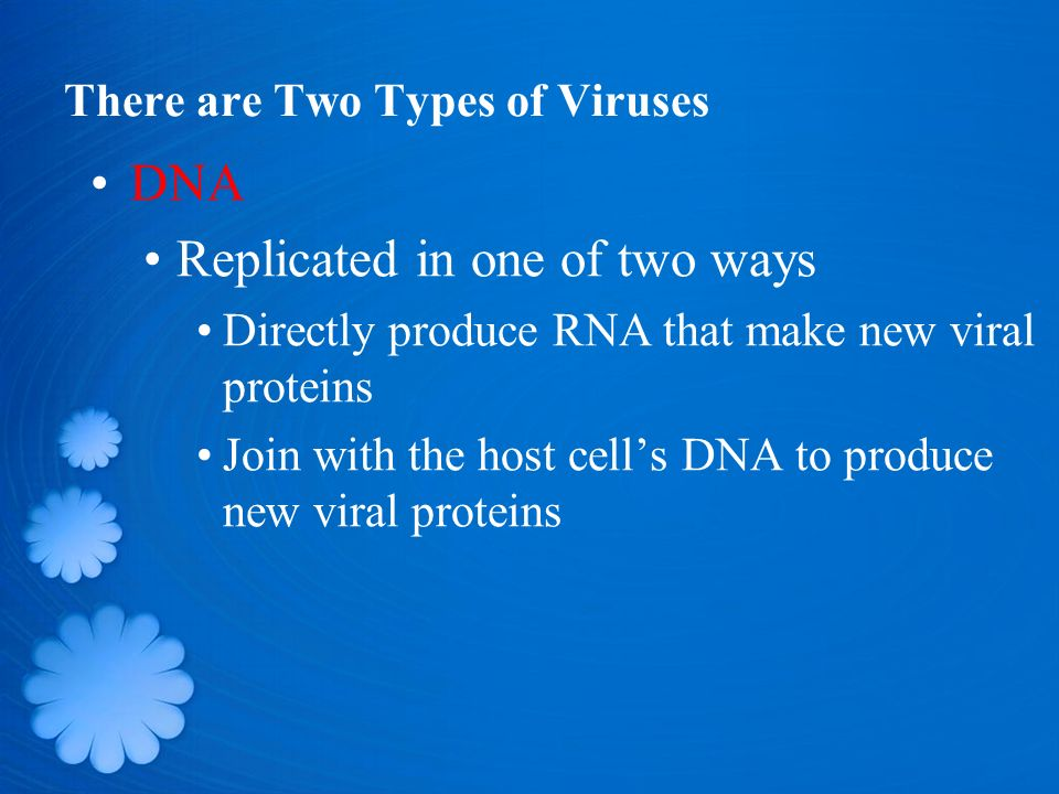 There are Two Types of Viruses DNA Replicated in one of two ways Directly produce RNA that make new viral proteins Join with the host cell's DNA to produce new viral proteins