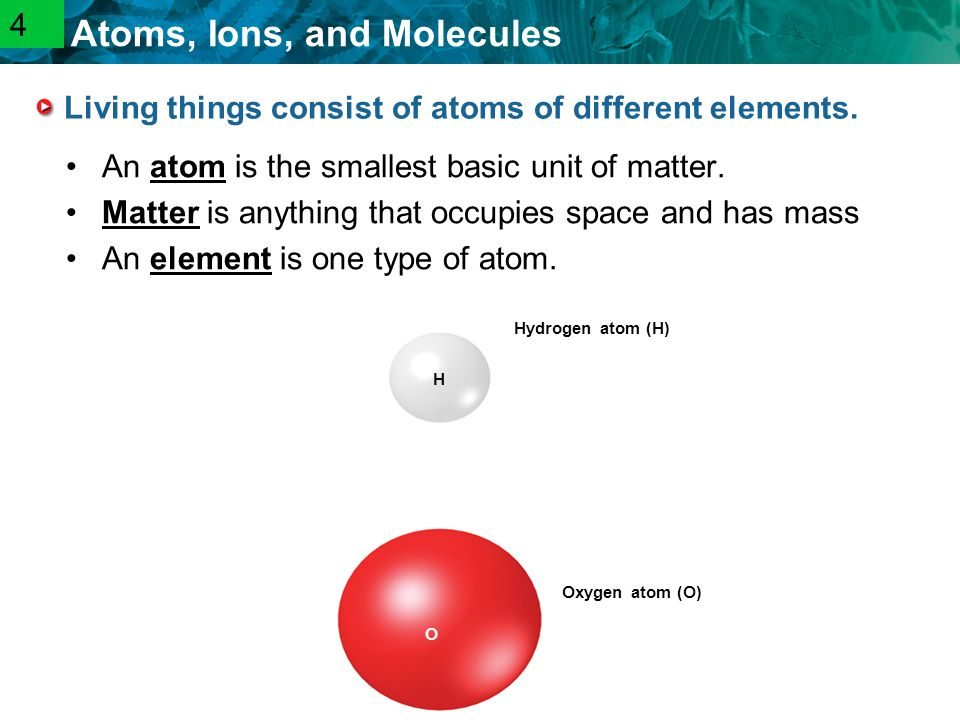2.1 Atoms, Ions, and Molecules Living things consist of atoms of different elements.