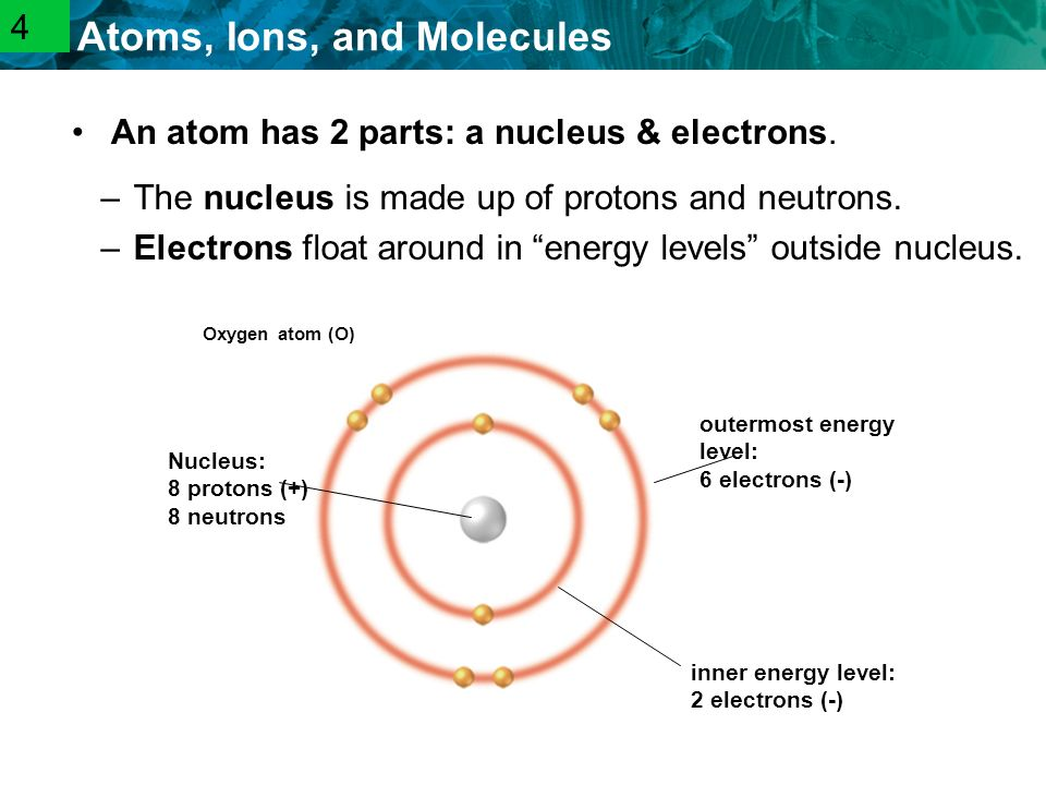 2.1 Atoms, Ions, and Molecules –The nucleus is made up of protons and neutrons.