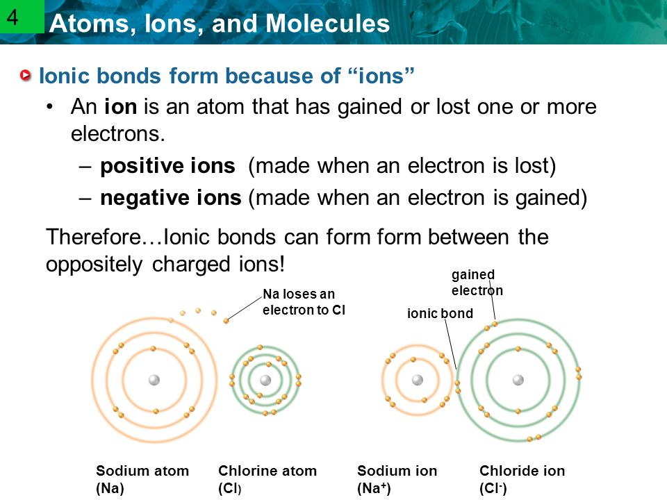 2.1 Atoms, Ions, and Molecules Ionic bonds form because of ions An ion is an atom that has gained or lost one or more electrons.