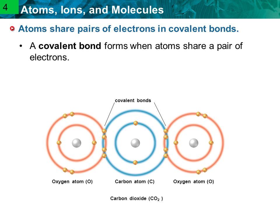 2.1 Atoms, Ions, and Molecules Atoms share pairs of electrons in covalent bonds.